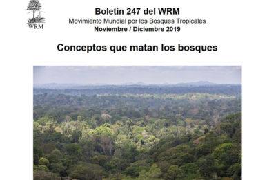 [Boletín] Conceptos que matan los bosques | Boletín 247 – Diciembre 2019