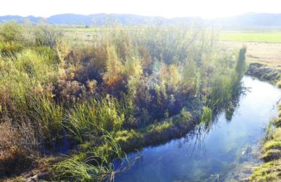 Minera canadiense lleva 12 años contaminando el agua y dañando los cultivos, acusan en Durango