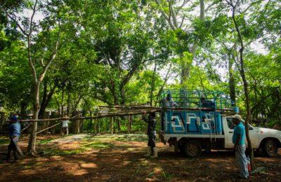 Sembrando Vida sirve al despojo igual que el Tren Maya y Corredor Transístmico, señala investigación