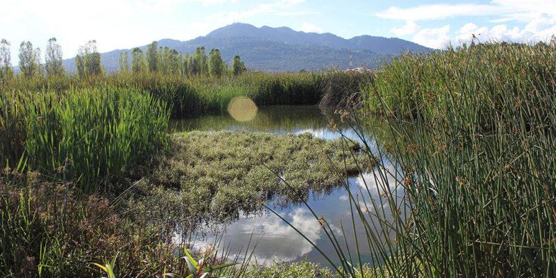 Acuerdan delimitar humedales La Kisst y María Eugenia en Chiapas