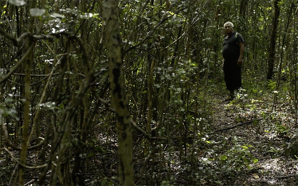 El Tren Maya privatizará los ejidos
