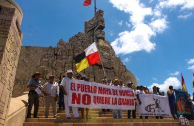 Tribunal federal en Yucatán tiene en sus manos la decisión de proteger los derechos humanos de la infancia maya contra la industria porcícola